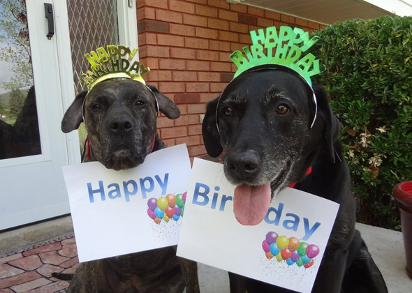 15 Cats And Dogs Celebrating Birthdays