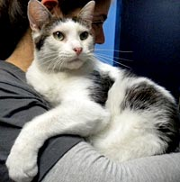Idaho the cat is up for adoption in Plainfield, N.J.