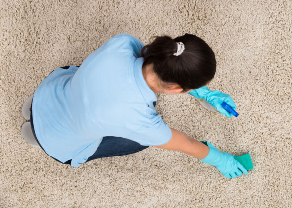 Solutions For Pet Stained Carpets Natural Cleaning Products