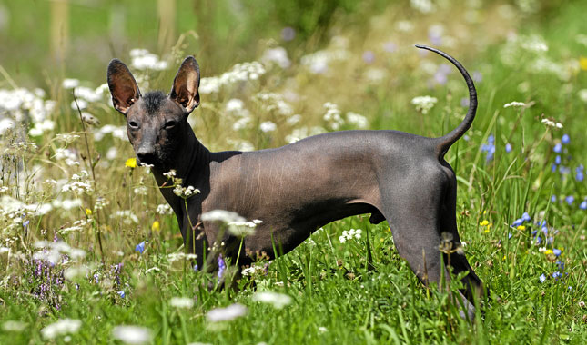 Breeds Of Black Dogs List