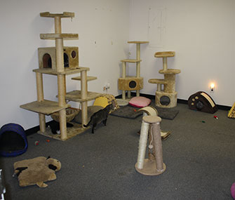 Above is the new cat playroom at All About Spay Neuter.