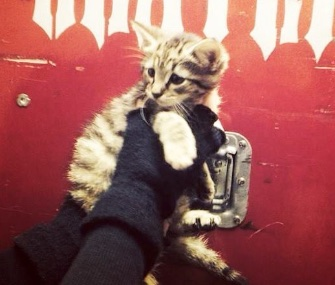 Members of the heavy metal band Slayer rescued a homeless kitten, and found an owner for her.