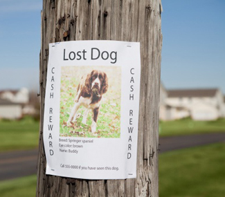 Lost Pet Sign