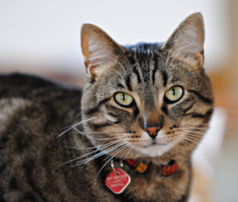 microchips and tags why your pets need id