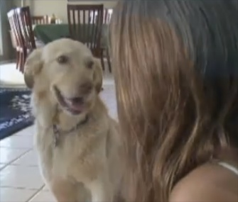 Murphy the Golden Retriever has been reunited with the Braun family nearly two years after going missing at a campground.