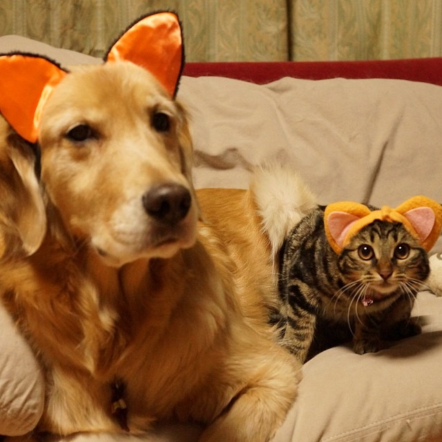 dog and cat with ears
