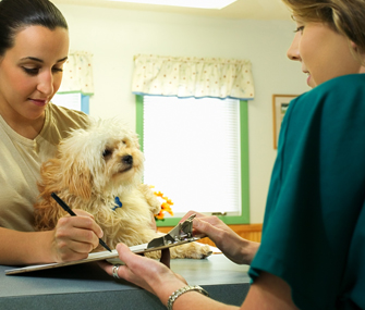 how to become a vet receptionist