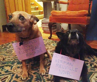 Dogshaming Tumblr