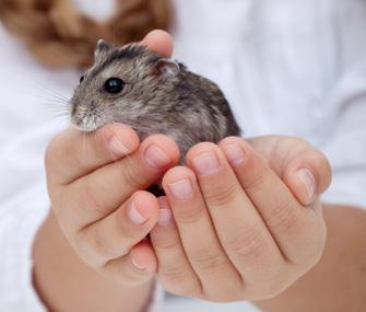 Kid Holding Hamster