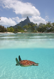 Turtle Sanctuary in Bora Bora
