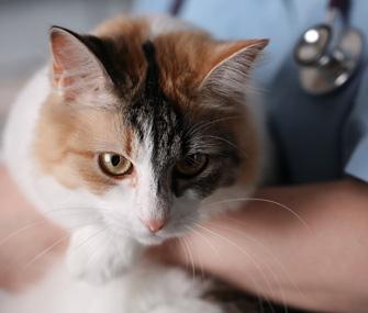Vet holding cat