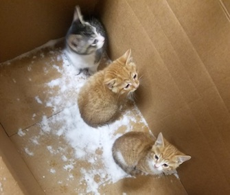 A total of four kittens were found abandoned in a box during a Cleveland snowstorm.