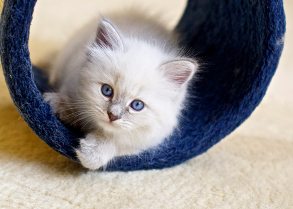 The Most Popular Kitten Names of 2015