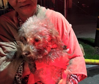 A dog who was found in a crate during a house fire is alive thanks to firefighters who revived it.