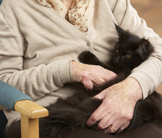 Senior Woman Interacting With Cat