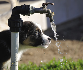 Dog drinking from water pipe