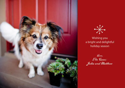 holiday cards cowbelly pet photography - Pet Holiday Cards