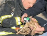 Firefighter adopts kitten he rescued