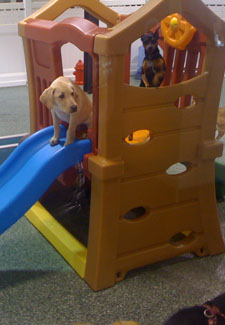 dog on indoor playground at hotel