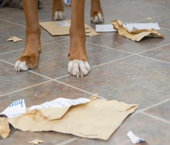 Dog eating mail