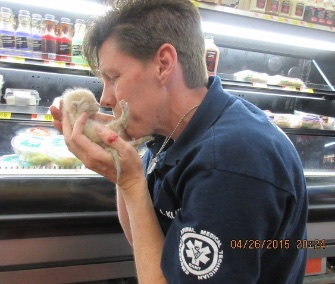 Two kittens trapped under a refrigerated case at an Arizona Walmart were rescued and adopted out.