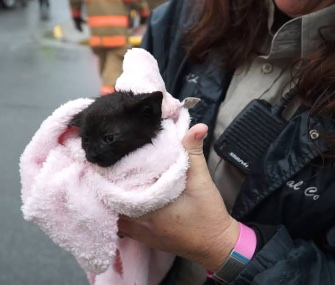 A preschool-aged boy heard the cries of this tiny kitten in a storm drain.