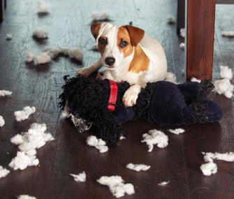 Dog with destroyed stuffed animal