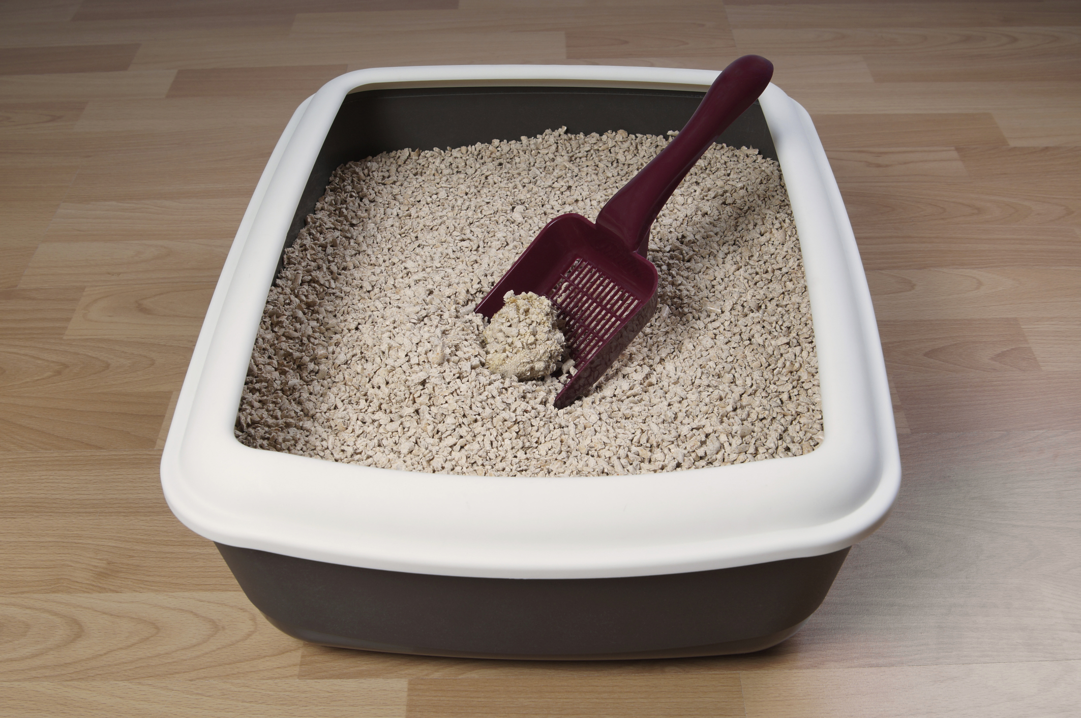 Cat Litter Box Image