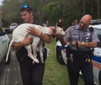 Police officers and firefighters in Port Orange, Florida, worked to free Sailor from the base of a tree.