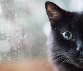 8 Surprising Animal Superstitions