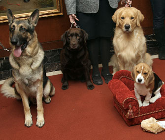 The Labrador Retriever continued its reign as the most popular dog breed in the U.S. in 2012.