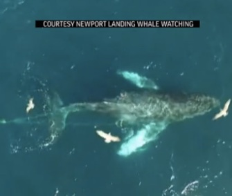 Rescuers cut away hundreds of feet of fishing line to save an entangled humpback whale off the California coast.