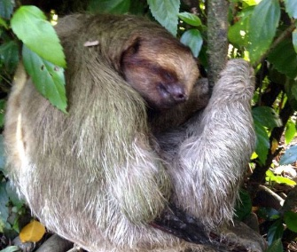 A badly injured sloth survived thanks to the quick actions of the family who found him in Costa Rica.