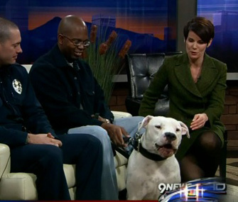 9news anchor and rescued dog
