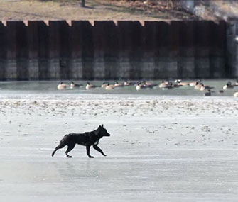 A Chicago police team spent three hours rescuing this Shepherd from thin ice.