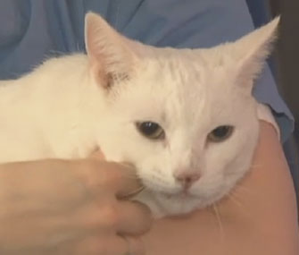 Sugar the cat who fell 19 stories