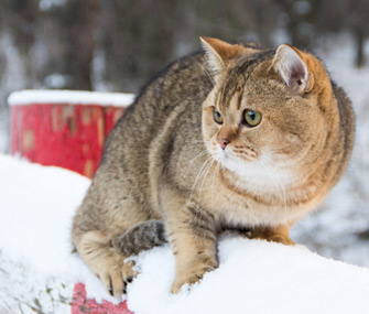 Outdoor Cat in Winter