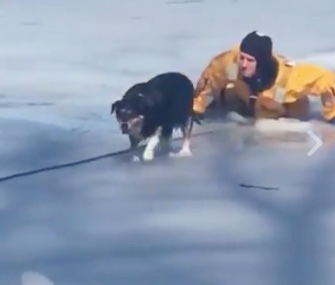A Boston firefighter saved Maggie the dog after she fell through the ice on a pond.
