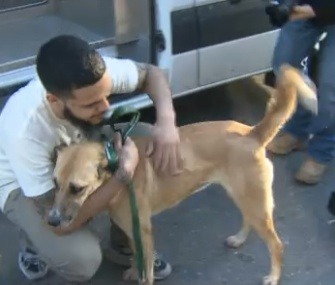 Ten stray dogs rescued from Sochi, Russia, arrived in Washington, D.C., on Thursday.