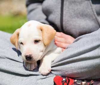 tips for surviving your first 30 days with a new puppy