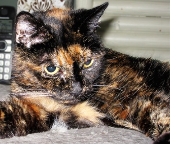 Tiffany Two of San Diego was named the World's Oldest Cat. She'll turn 27 next month.
