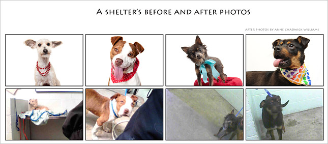 Anne Chadwick Williams shelter dog before and after images