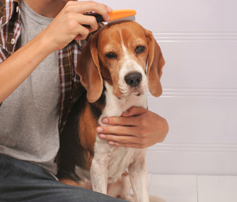 Dog being brushed with flea comb
