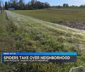 Spiderweb takes over neighborhood