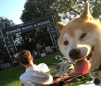 Kenji, a Shiba Inu, enjoys a dog-friendly event sponsored by the Walker Art Center.