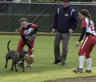 A dog ran onto the field during a college softball game and snagged the players' gloves.