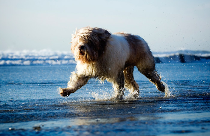 11 Independent Dog Breeds