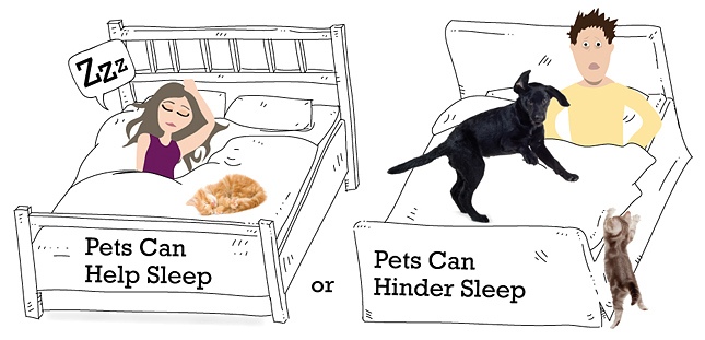 Illustration on pets in the bed helping our hurting sleep