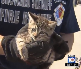 Firefighters in South Florida named the kitten they saved from a storm drain Stormy.