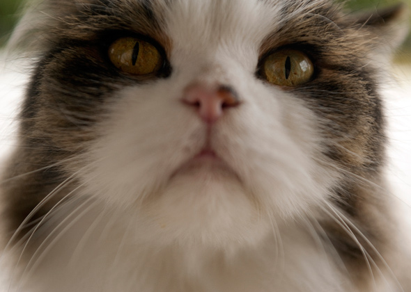 4 Ways You Might Be Misinterpreting Your Cat's Body Language